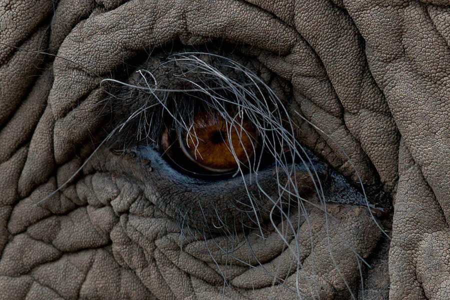 Elephant eye | ZEISS ZA VARIO-SONNAR 24-70MM F2.8  <br> Click image for more details, Click <b>X</b> on top right of image to close